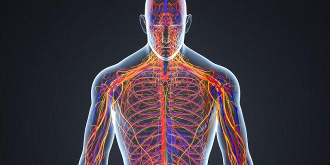 Sinir Sistemi Nedir