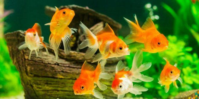 Balık Nedir