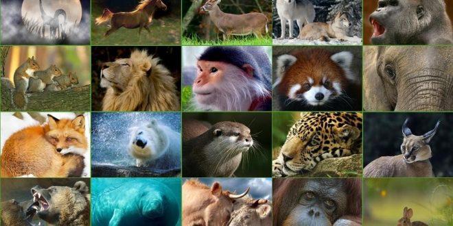 Memeli Hayvanlar Nedir