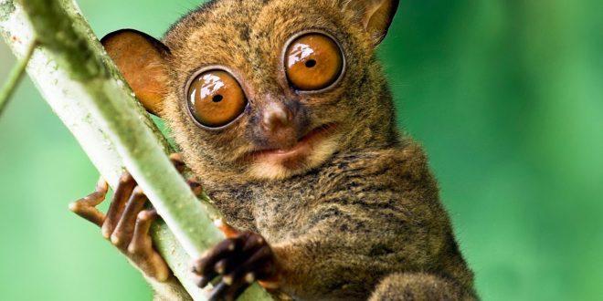 Dünyanın En ilginç Hayvanları Hangileridir